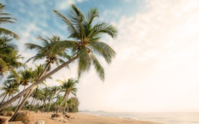 Picture sand, sea, wave, beach, summer, palm trees, shore, summer, beach, sea, seascape, beautiful, sand, paradise, …