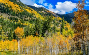 Picture The sky, Mountains, Autumn, Forest, The slopes