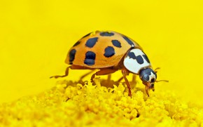 Picture nature, ladybug, insect