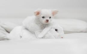 Picture rabbit, puppy, doggie, white rabbit