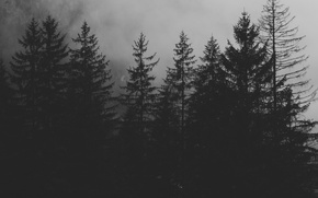 Picture forest, nature, fog, the darkness
