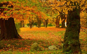 Picture Autumn, Trees, Park, Fall, Foliage, Park, Autumn, Colors, Trees, Leaves