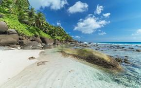 Picture beach, nature, tropics, shore