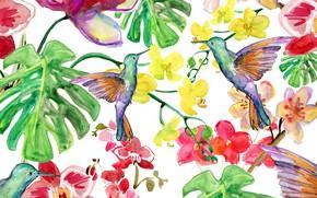 Picture Flowers, Leaves, Birds, Background, Texture, Kalibri