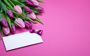 Picture bouquet, tulips, love, pink, bow, fresh, pink, flowers, romantic, tulips, gift, purple