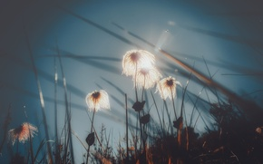 Picture the sky, light, flowers