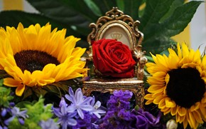 Picture sunflowers, rose, Bud, the throne, the Queen of flowers