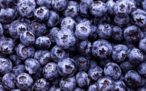 Picture berries, a lot, Blueberries
