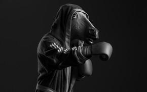 Wallpaper head, horse, Boxing