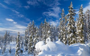 Picture winter, forest, the sky, snow, ate, the snow, Sweden, Sweden, Selenium, Halls