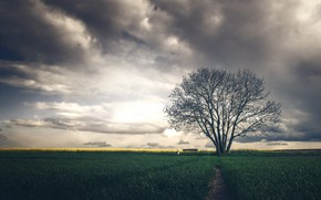 Picture field, tree, bench