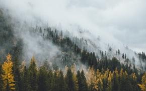 Wallpaper forest, autumn, haze, fog