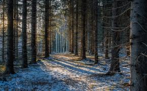 Wallpaper forest, snow, Finland, Finland, Savonlinna