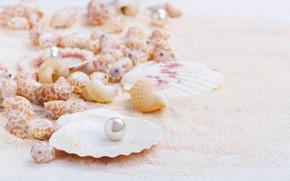 Wallpaper marine, seashells, shell, sand, sand, perl, pearl, still life