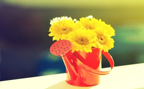 Picture flowers, bouquet, lake, yellow gerberas
