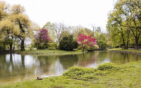 Picture trees, nature, Park, river