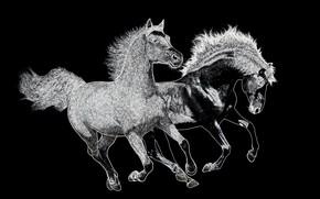 Picture horse, horses, contour plot