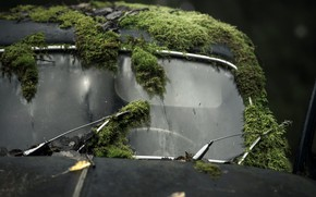 Picture machine, background, moss