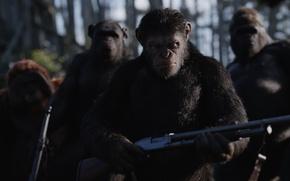 Picture cinema, gun, monkey, forest, weapon, movie, gorilla, shotgun, film, rifle, 20th Century Fox, assault rifle, ...
