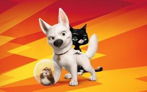 Picture 2008, Volt, Cartoon, Movie, Rhino, Bolt, Mittens