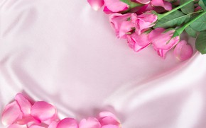 Picture flowers, roses, petals, silk, pink, buds, fresh, pink, flowers, beautiful, silk, roses
