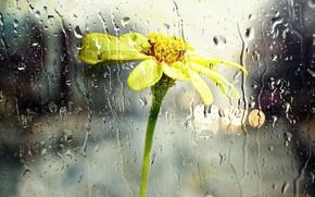 Picture flower, glass, drops, rain