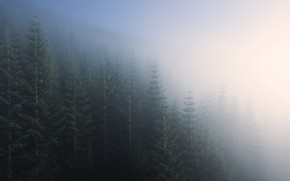 Picture forest, nature, fog, morning