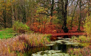 Picture Nature, Autumn, Lake, Forest