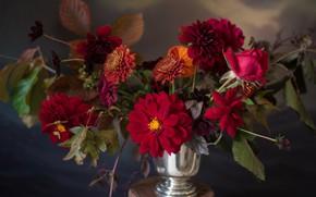 Picture rose, bouquet, chrysanthemum, dahlias
