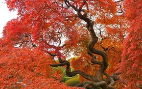 Picture Tree, Autumn, Fall, Tree, Autumn, Colors