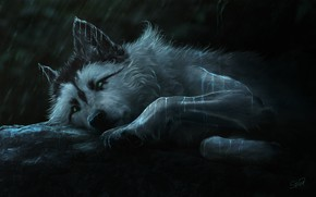 Picture look, night, wolf