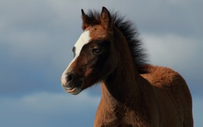 Picture the sky, background, baby, foal