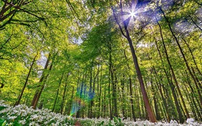 Picture Greens, Nature, Spring, Forest