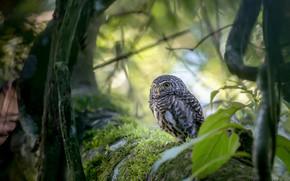 Picture trees, bird, owl