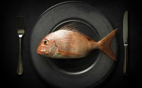 Picture background, food, fish