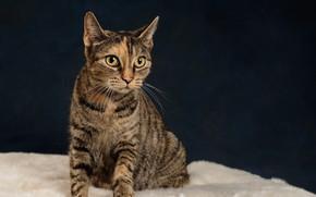 Wallpaper cat, mustache, eyes