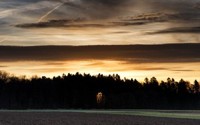 Picture field, forest, night