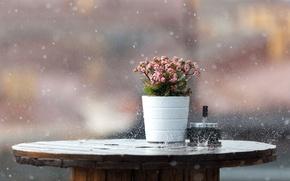 Picture wet, macro, flowers, table, background, rain, bursts, the shower, bokeh, Kli