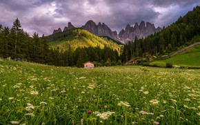 Picture forest, grass, landscape, clouds, hills, meadow, house, fabulously, ate, the slopes, nature, mountains, summer, flowers