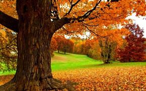Wallpaper leaves, autumn, trees