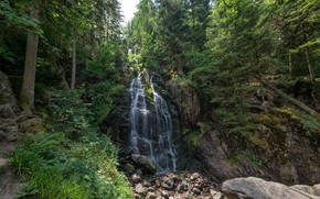 Picture forest, trees, nature, stones, waterfall