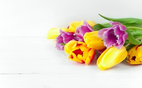 Picture flowers, spring, colorful, tulips, fresh, flowers, beautiful, tulips, spring, bright