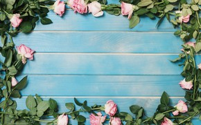 Picture roses, colorful, summer, pink, wood, blue, pink, flowers, background, beauty, decor, roses, decoration
