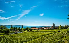 Picture greens, the sky, the sun, trees, lake, field, home, Germany, plantation, Hagnau