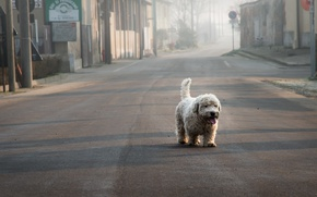 Picture loneliness, street, dog