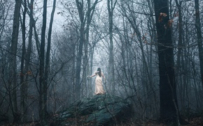 Picture forest, girl, fog, stone, insect, Aleah Michele