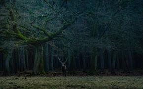 Wallpaper forest, trees, branches, deer