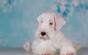 Picture baby, puppy, blue background