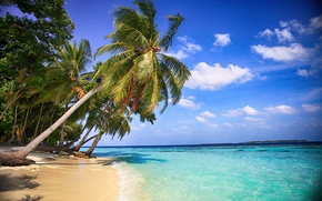 Picture sea, beach, water, nature, palm trees, beauty