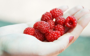 Picture summer, berries, raspberry, background, food, hands, harvest, fingers, nails, a lot, palm, delicious, painted, a …